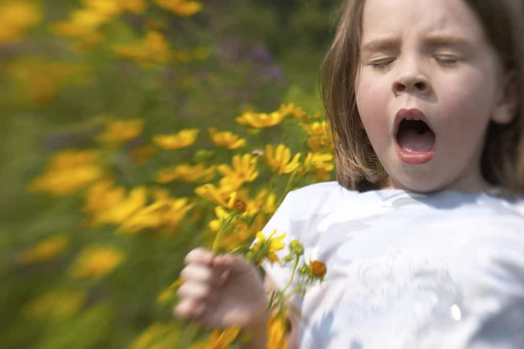 Young girl sneezing with hay fever allergy to a bunch of flowers