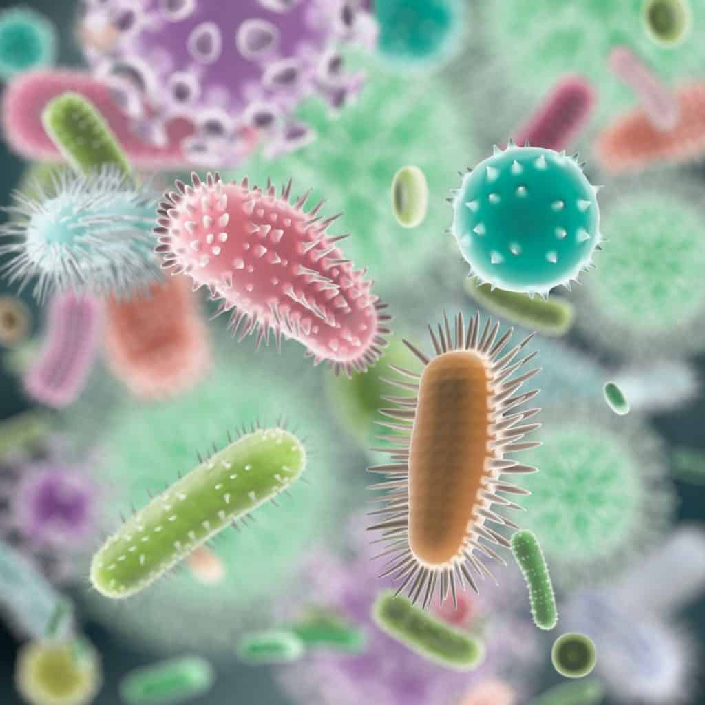 Probiotic strains in gut