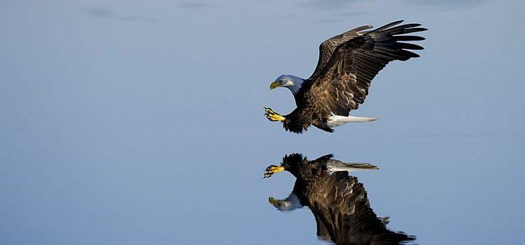 Stress fight and flight