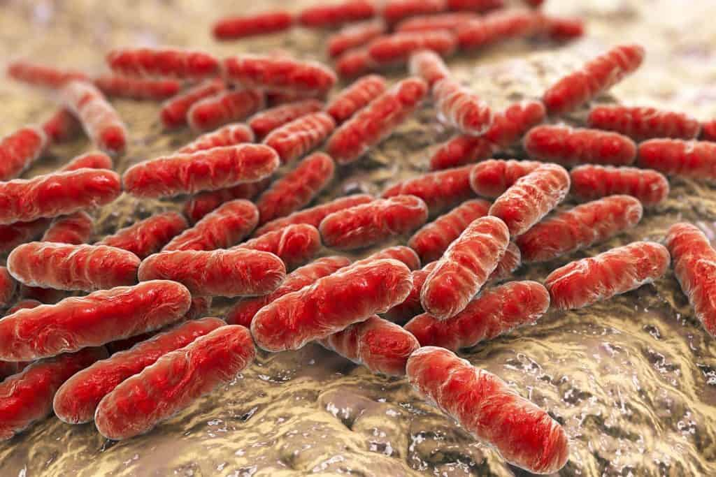 Healthy bacteria, known as probiotics, within the gut