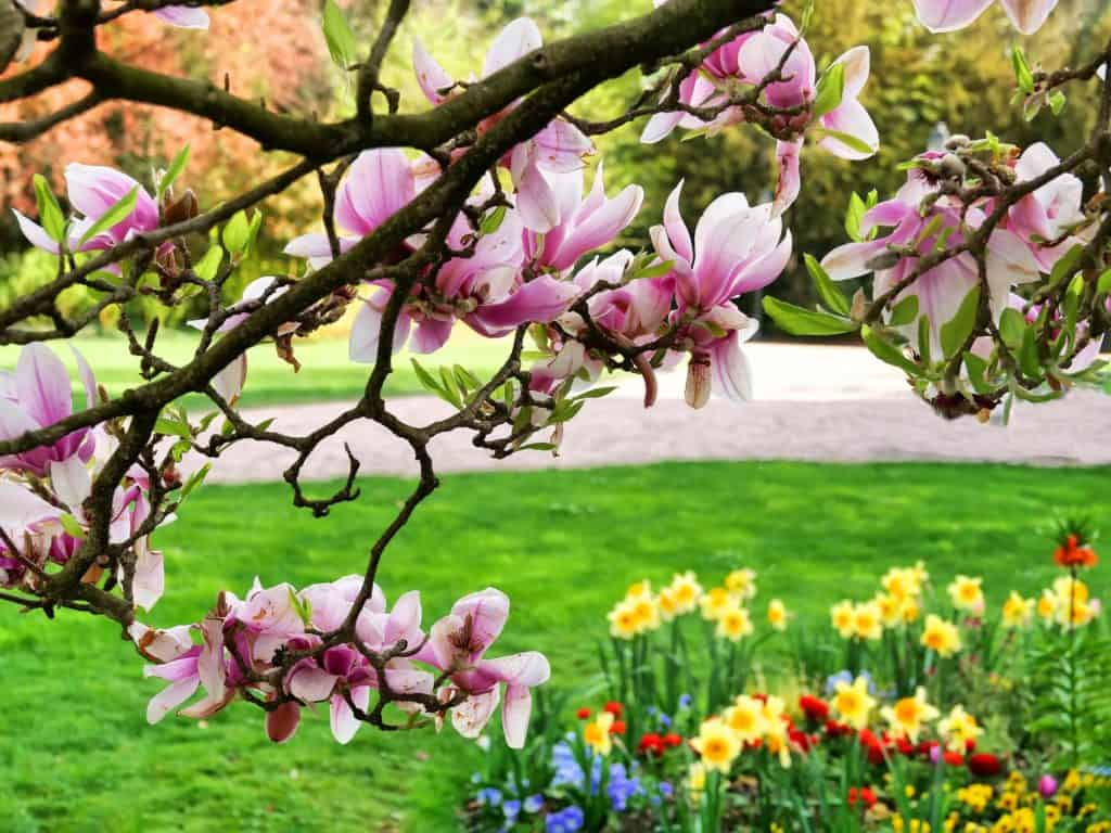 Spring flowers and magnolia