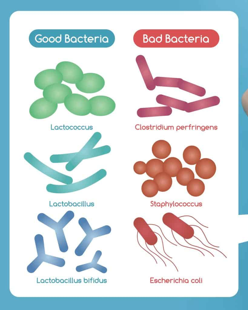 Choosing the right probiotics for your symptoms is crucial. Not all probiotics are the same