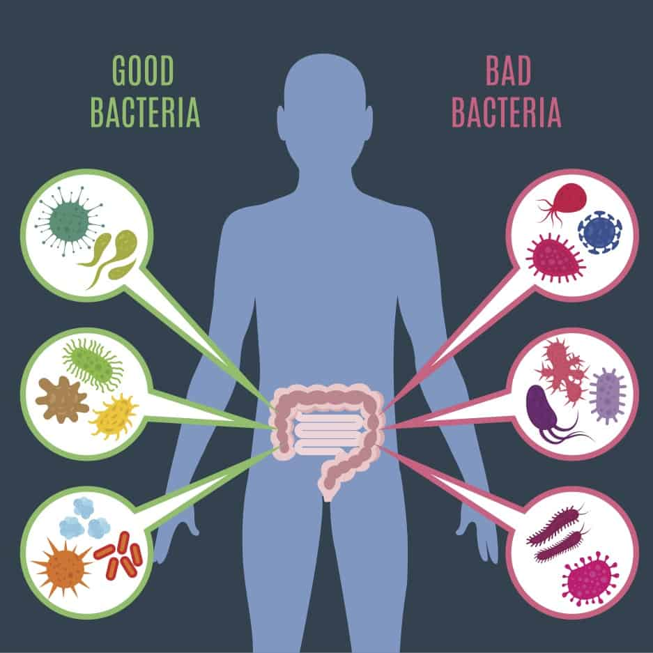 Benefits of making sure your gut flora is healthy