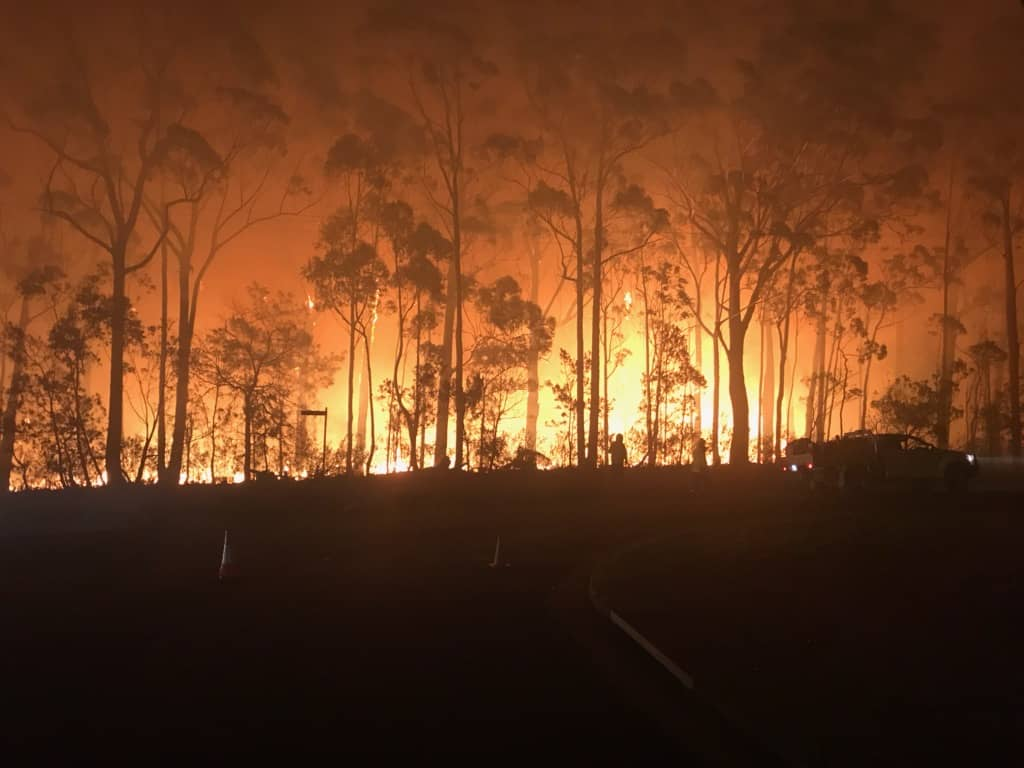 Bushfires in Australia, fundraiser to help animals