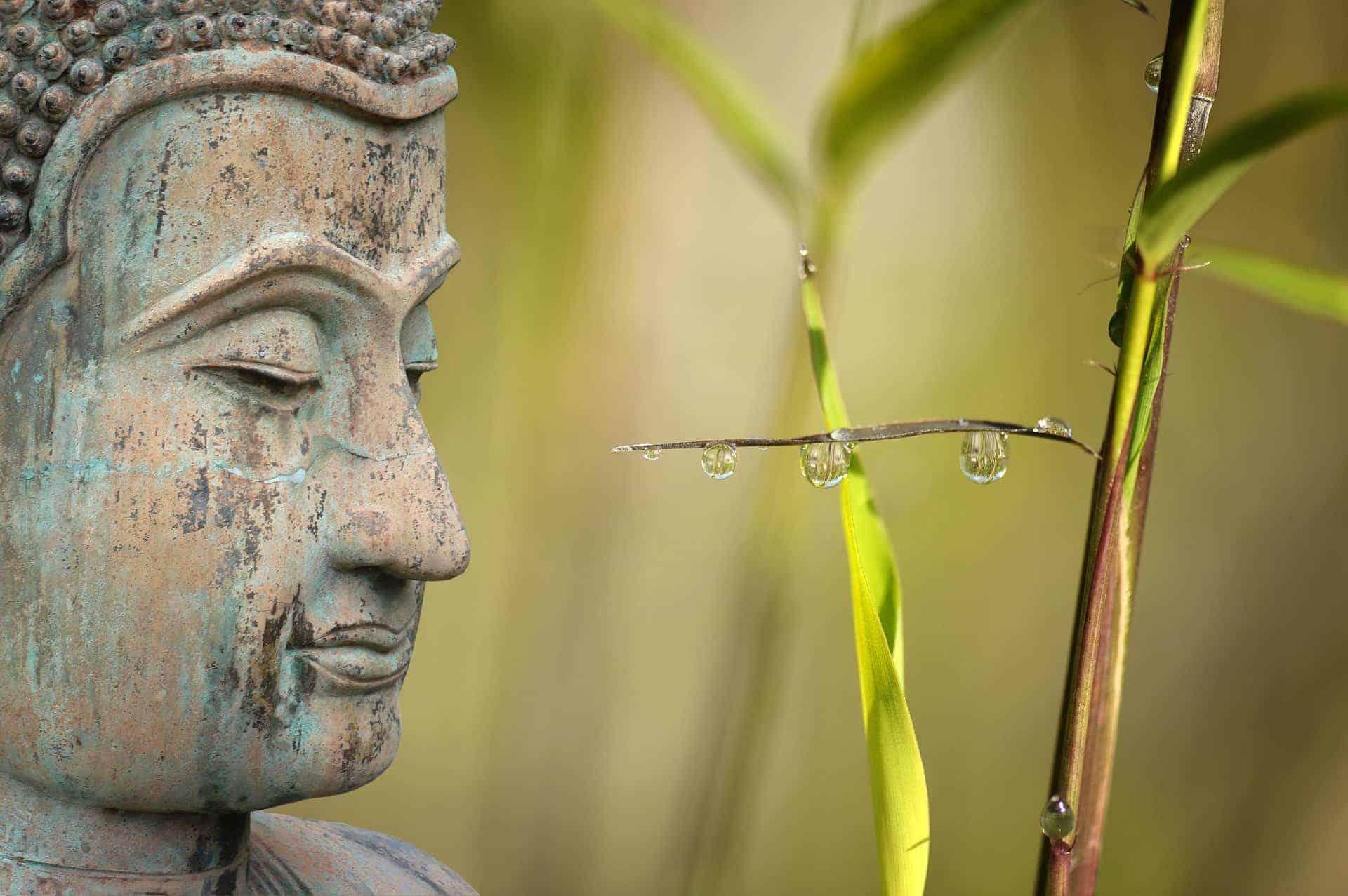 Buddha wellness