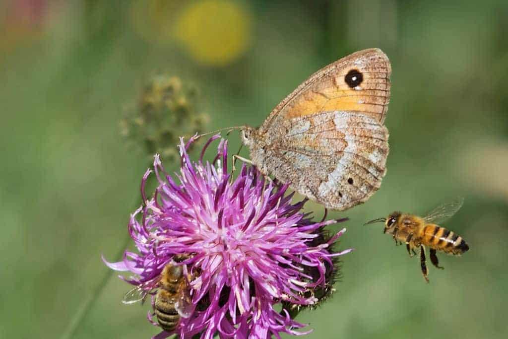 Organic September: reasons to go organic like helping wildlife