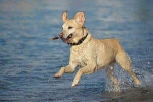 Increase your vitality to be carefree and active like a dog