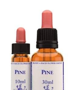Pine Bach Flower Remedy