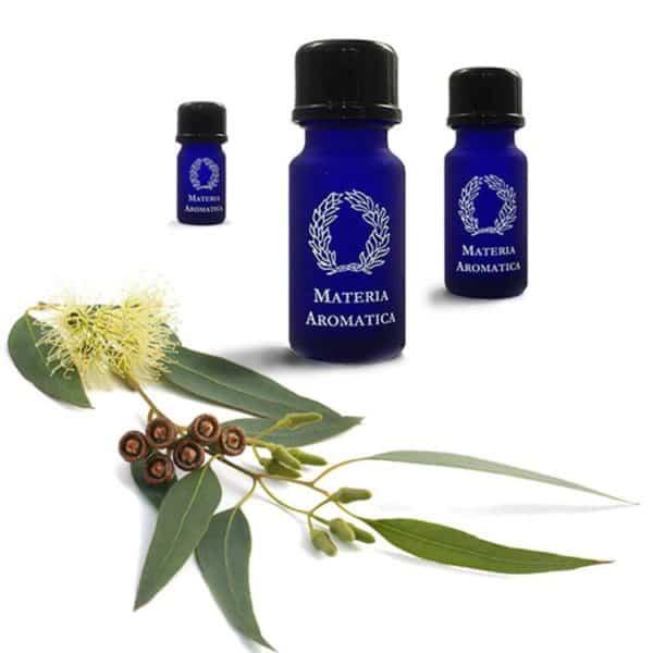 Eucalyptus citriadora